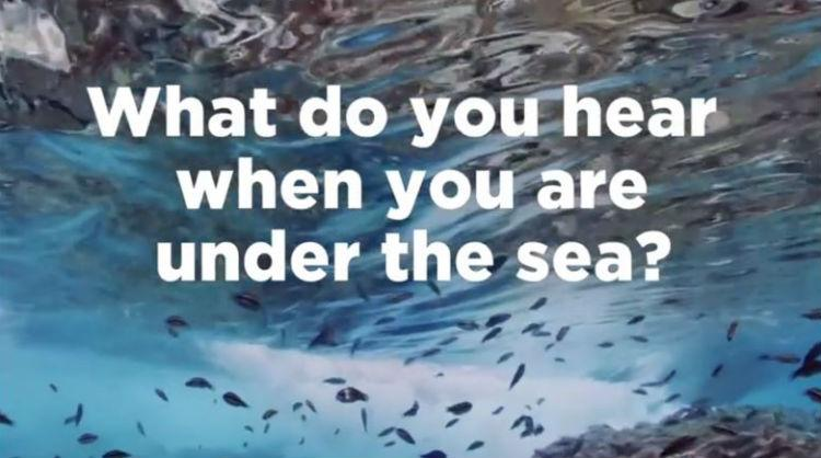 Video capture made to coincide with World Ocean Day, the Canary Islands